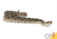 Como montar criação de cobras para extração do veneno