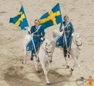 Tire sua dúvida: Por que os cascos dos cavalos se desgastam?