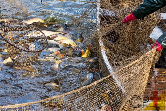 Especialista: propagação artificial suprirá a demanda por peixes   Notícias Cursos CPT