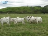 Confira o novo Curso Online UOV Recuperação de Pastagens - Método Direto