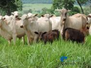 Conheça as 4 leis universais do Pastoreio Racional Voisin