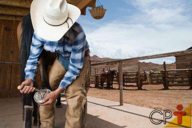 Tire sua dúvida: Há diferença entre os quatro cascos de um cavalo?   Dicas Cursos CPT