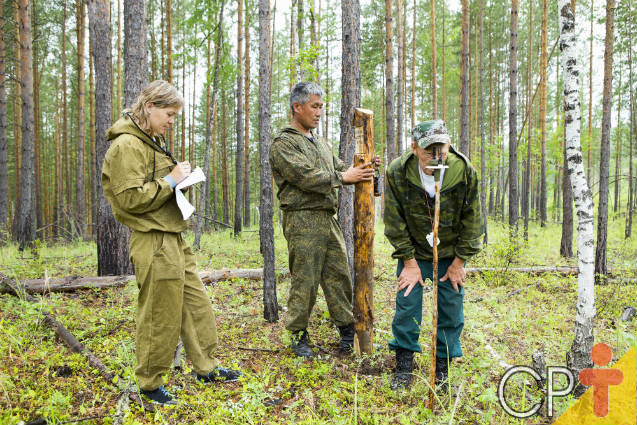 Hoje celebramos o Dia do Engenheiro Florestal