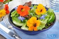 Conheça algumas flores comestíveis
