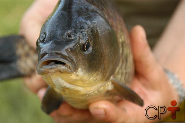 Os peixes são pecilotérmicos. O que significa isso?   Dicas Cursos CPT