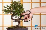 Produzindo mudas de bonsai: o método misho