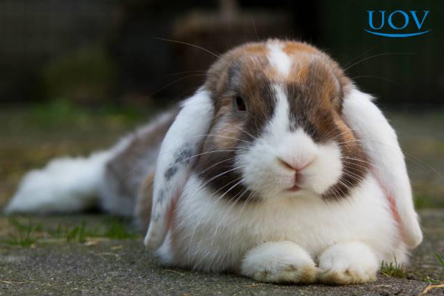 Dicas de instalações para criação de coelhos