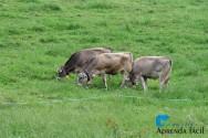 Manejo sustentável de pastagens: conhecendo o Pastoreio Racional Voisin