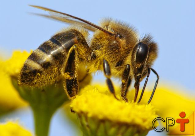 Como as abelhas recolhem e transportam o pólen das flores?    Artigos Cursos CPT