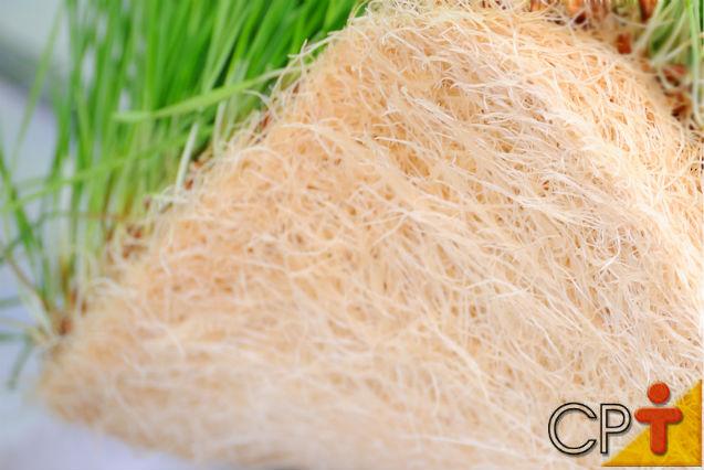 Milho hidropônico em substratos orgânicos (palhas, bagaços e outros)   Dicas Cursos CPT