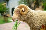 Se milho hidropônico é viável para a alimentação animal? Descubra!