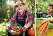 Comemore! Hoje é Dia do Agricultor!
