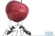 Como me livrar das formigas em casa?