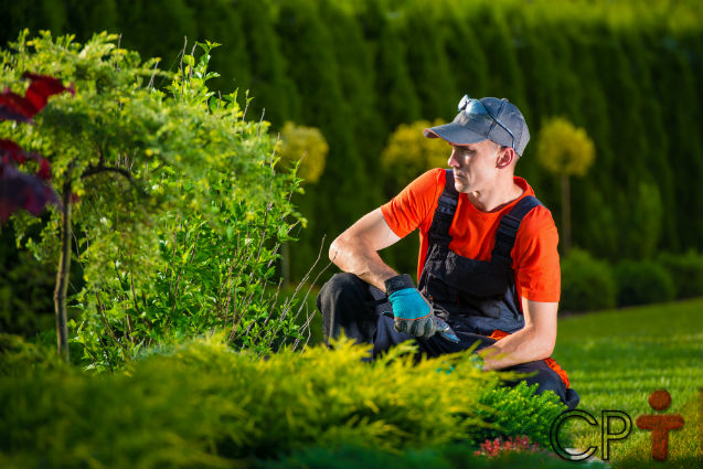 Especialista: Jardinagem é ciência, arte e técnica   Notícias Cursos CPT