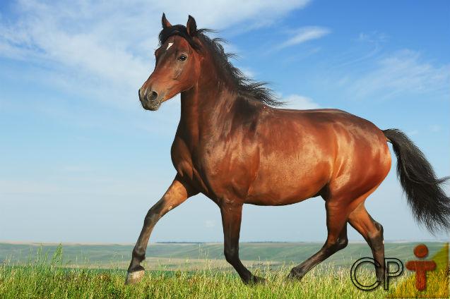 Cavalo saudável, cavalo doente: conheça as características   Artigos Cursos CPT