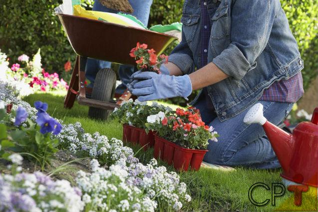 Para belos jardins, conhecimento adequado!   Dicas Cursos CPT