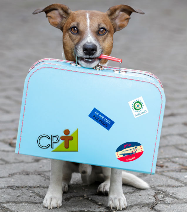 Antes de adotar um cãozinho, pense bem!   Artigos Cursos CPT