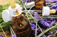 Florais de Bach: como extrair a essência das flores