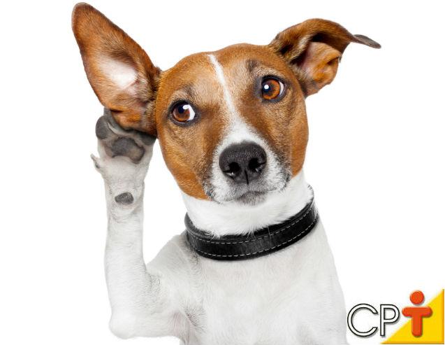 COMUNICAÇÃO: maior entrave entre os cães e os homens   Artigos Cursos CPT