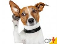 COMUNICAÇÃO: maior entrave entre os cães e os homens