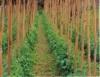 Cultivo orgânico,  sistema de produção ecologicamente equilibrado e autossustentável