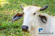 Fontes alternativas de fósforo para gado de corte a pasto