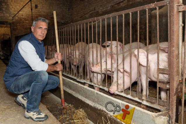 Especialista: Pessoas desejam consumir carne com qualidade ética   Notícias Cursos CPT