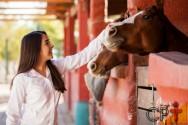 Tem paixão por cavalos? Crie um centro hípico!