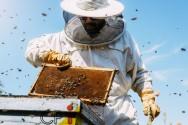 Parisienses implantam apiários em edifícios históricos