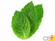 Conheça 5 plantas medicinais que curam