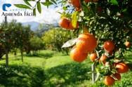 Saiba mais sobre podas em frutíferas