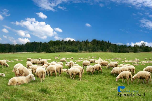 Nutrição de ovinos: vitaminas importantes para o metabolismo