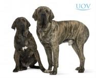 Dicas para criar cão Fila Brasileiro