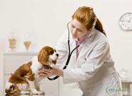 Atenção, veterinários! Conheça agora nosso novo Software: CPT Vetpédia Cães e Gatos