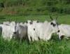 Pastejo rotacionado: um avanço na tecnologia de manejo de pastagens
