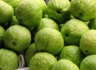 """Pode-se destinar a produção de goiabas para o comércio de frutas """"in natura"""" ou para a industrialização."""