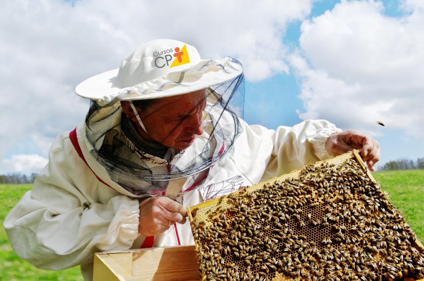 Criação de abelhas - planejamento do apiário   Artigos Portal Agropecuário