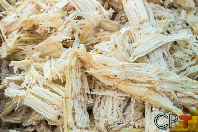 Por que alimentar vacas leiteiras com cana-de-açúcar?   Artigos Cursos CPT