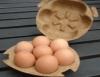 Embalagem ecológica é novidade na comercialização de ovos