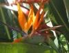 Flores de corte levam a beleza dos jardins para ambientes internos