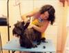 Banho e tosa em cachorros e gatos exigem técnicas específicas