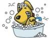 Banho em cães, quando e como?