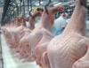 Brasil voltará a ser líder na exportação de frango