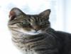 Gatos também recebem cuidados especiais