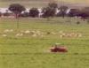 Adubação de pastagens  está relacionada à qualidade das forrageiras e à produtividade