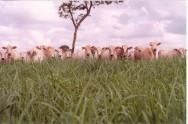A adubação das pastagens está diretamente relacionada à qualiadade das forrageiras, capacidade de suporte e à alta produtividade da pecuária.