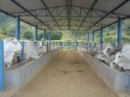 https://cptstatic.s3.amazonaws.com/imagens/enviadas/materias/materia1836/m-instalacoes-bovinos-corte.jpg