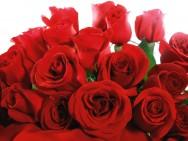 A rosa continua sendo a grande campeã de vendas.