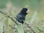 A caça predatória e a destruição do habitat natural são fatores que atuam na diminuição da população desses espécimes.