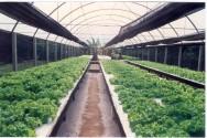 A hidroponia tem grande aplicação em pequenas propriedades, permitindo uma produção mais intensiva.
